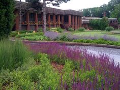 Love this look Piet Oudolf style garden