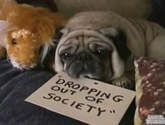 @Kyle Bragger Mears This pug's self esteem was destroyed by society's expectations