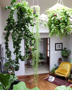 Oversized hanging plants for interiors - Dekoration Ideen 2019