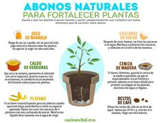 6 natural fertilizers that will help strengthen your plants - Flores Eco Garden, Herb Garden Design, Home Vegetable Garden, Natural Garden, Fruit Garden, Edible Garden, Garden Plants, Growing Vegetables, Growing Plants