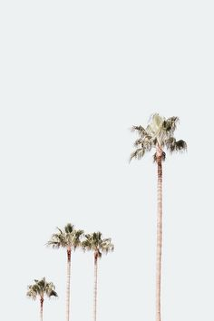 Ideas palm tree aesthetic vintage for 2019 Collage Mural, Bedroom Wall Collage, Photo Wall Collage, Aesthetic Pastel Wallpaper, Aesthetic Backgrounds, Aesthetic Wallpapers, Retro Wallpaper, Aesthetic Collage, White Aesthetic