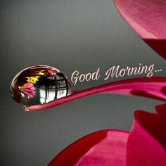 Every smile 😀 makes you a day younger. Good Morning Gift, Good Morning Coffee Gif, Good Morning Friends Images, Good Morning Dear Friend, Good Morning Images Download, Good Morning Greetings, Morning Pictures, Gd Morning, Morning Pics