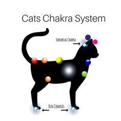 Animal_Chakras