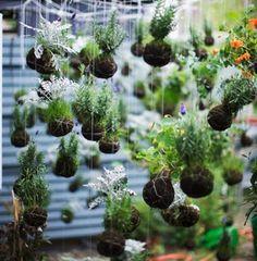 50 besten Kokedama Bilder auf Pinterest | Topfpflanzen, Balkongarten ...