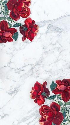 wallpaper and roses
