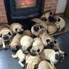 Hot pugs