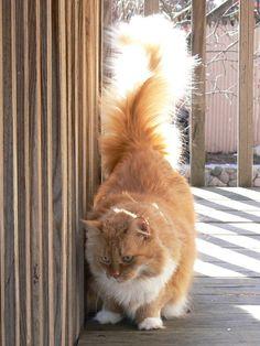 Beautiful Tail...