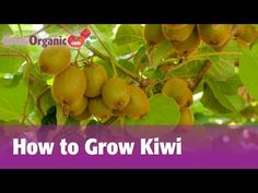 How to Grow Kiwifruit: 12 Steps (with Pictures) - wikiHow