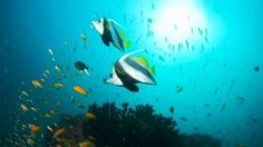For jet-setting scuba divers, Mozambique offers four secluded islands with great coral reefs and clear waters. It also offers ship wreck exploration and night diving where you can swim through sunken ships or swim along with curious dolphins.