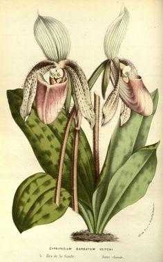 v.14 (1861) - Flore des serres et des jardins de l'Europe - Biodiversity Heritage Library