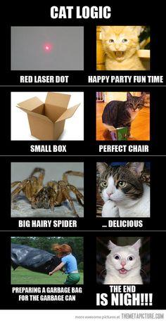 cat logic. @Sharon Macdonald Price Kerkof the garbage bag!
