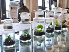 Horta na estante, em caixas, na janela... é saúde direto para sua mesa! | A Vida Como A Vida Quer
