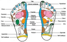 Reflexology is the application of pressure to points on the feet, hands, or head. Many people think of Reflexology as a foot massage, but it is more involved. Thai Massage, Foot Massage, Point Acupuncture, Plexus Solaire, Essential Oils For Massage, Foot Reflexology, Massage Benefits, Health Benefits, Getting A Massage