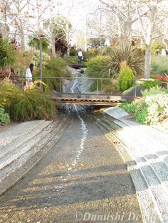 still trying to figure out where this is Rain Garden, Terrace Garden, Water Garden, Landscape Elements, Landscape Design, Garden Design, Modern Landscaping, Outdoor Landscaping, Architecture Plan