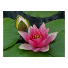 ==>>Big Save on          	Water lily print           	Water lily print Yes I can say you are on right site we just collected best shopping store that haveThis Deals          	Water lily print Review on the This website by click the button below...Cleck Hot Deals >>> http://www.zazzle.com/water_lily_print-228517056775868283?rf=238627982471231924&zbar=1&tc=terrest