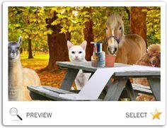 A Rosh Hashanah Message pet ecard Thanksgiving Messages, Thanksgiving Parade, Family Thanksgiving, Thanksgiving Ecards, Rosh Hashanah Cards, Pets, Animals And Pets, Thanksgiving Day Parade