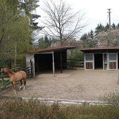 Hofmeister Bildergalerie StallAussenboxen mit Paddock günstig kaufen im Hofmeister Pferdesport