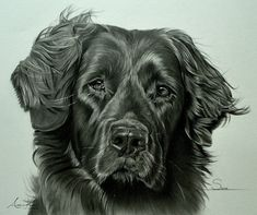 Color Pencil Drawing of a Dog This one was done as a commission drawing last year. I almost never take on commission drawings ( maybe one or two per yea. Color Pencil Drawing of a Dog Dog Drawing Images, Tiger Drawing, Animal Drawings, Pencil Drawings, Drawing Animals, Pencil Art, Colour Pencil Shading, Sweet Drawings, Black And White Drawing