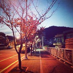 gaonkkk / #집에가는길 해가 뉘엿뉘엿질때 스쳐지나가는 바람이 너무 차갑다. / #골목 #거리 #식물 / 2013 11 26 /
