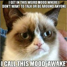 Grumpy Cat - I made this meme in memory of Grumpy Cat who sadly passed away today. RIP Grumpy Cat, you'll love heaven because there is so much to hate xoxo Grumpy Cat Quotes, Funny Grumpy Cat Memes, Funny Cats, Funny Memes, Grumpy Cats, Best Cat Memes, Cute Cat Memes, Cat Puns, Cats Humor