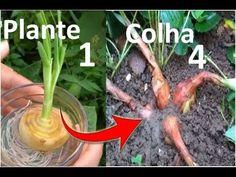 Nunca mais compre cebola, Plante e colha em casa super fácil! - YouTube