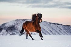 Horses In Snow, Unicorns, Art Nouveau, Ranch, Portraits, River, Beautiful, Pictures, Wild Animals