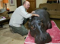 a hippo is a very strange pet, but Giada would be fighting day and night for that to happen!
