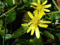 Yellow flower fleur jaune by pixizone