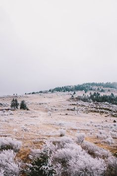 thedrivenewyork.com | Atmosphere & Landscape