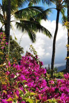 Fleurs à Kauai
