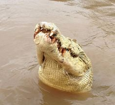The albino crocodile named Michael Jackson was shot dead in Australia's Northern Territory after it killed a fisherman.