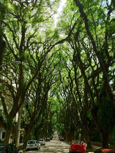 This beautiful tree-lined street in Porto Alegre, Brazil, is said to be one of the most beautiful streets in the world.