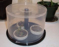 CD Spindle Case Greenhouse | DIY Seedling Greenhouses Ideas For Your Garden This Spring