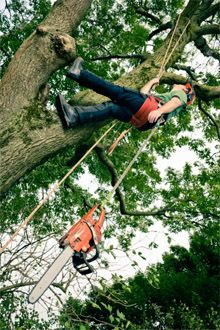 arborist in tree echo tree services
