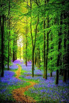 yapa changrai compartilhou originalmente com Amazing &Beautiful thing in the world:   Beautiful path forest