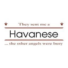 Havanese angels.  I say this all the time.  Charley is my guardian!