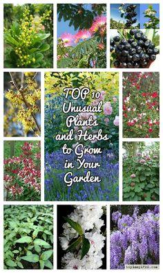 1000 Images About Pensacola Plants On Pinterest Climbing Hydrangea Cactus Flower And Plants