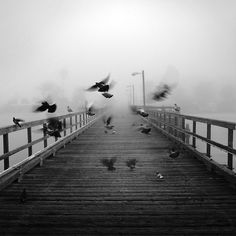 ★ INTO THE MIST (Birds in the fog <<< repinned by www.BlickeDeeler.de | Follow us on www.facebook.com/BlickeDeeler.de)