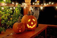 Owl and pumpkins night lights outdoors autumn bird owl halloween pumpkins Samhain Halloween, Halloween Ii, Halloween Prints, Halloween Costumes For Girls, Spirit Halloween, Holidays Halloween, Happy Halloween, Fall Pumpkins, Halloween Pumpkins