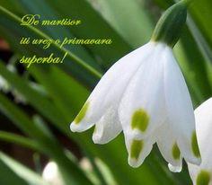 8 Martie, Romania, Day, Google, Plants, Beautiful, Flora, Plant, Planting