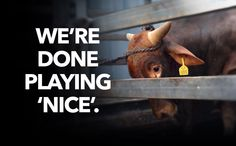 The gloves are off. Help launch the biggest #BanLiveExport public campaign in history.