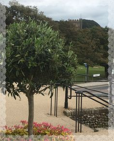 View toward Sidmouth church from Fortfield Terrace, where Elizabeth Barrett Browning lived for a while in Visit Devon, Elizabeth Barrett Browning, New Chapter, Poet, Writers, Terrace, Texts, 19th Century, Author