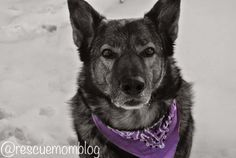 Pawsome Pet of the Week - Rolo