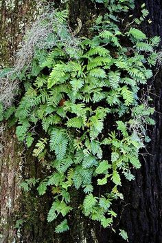 Close=up of that same fern