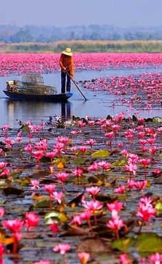 Red Lotus Lake, a beautiful Lake in Thailand is located at the north area of district of Kumphawapi. I don't really know why they call it Red Lotus Lake, as actually the colors of lotuses are dark pink. Places Around The World, Oh The Places You'll Go, Places To Travel, Places To Visit, Around The Worlds, Travel Destinations, Vacation Travel, Beautiful World, Beautiful Places