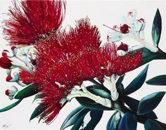 Jane Puckey - Pohutukawa flowers 558x711mm.