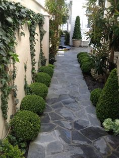 Line walk way with Boxwood...  Exterior Landscape