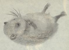 Иллюстрации Рут Tzarfati для нее детской книги Хорошие чувства и инстинкты: Биография хомяк (Израиль, 1964).