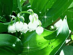 El mundo de paz en nosotros: Vivir como las flores