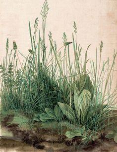 albrecht duerer, 1503: das grosse rasenstueck